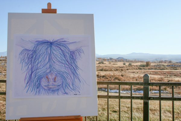 Hamish the Highland Cow Drawing